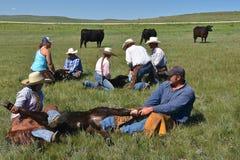 Cow-girl lassoing un veau pendant un rassemblement Images libres de droits