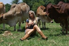 Cow girl sitting with heifer cows Royalty Free Stock Images