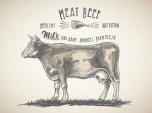 Cow in graphic style, and inscriptions. Stock Photos