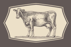 Cow in graphical style. Vector illustration of a cow in a graphical style (engraving), for the possible use of its label and packaging design stock illustration