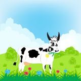 Cow grazes on meadow Stock Images