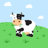 Cow grazing in the field Stock Images