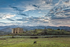 Cow grazing in front of derelict farm building in Corsica Stock Photo