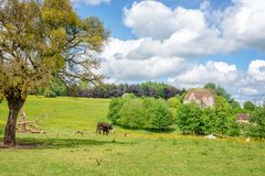 Cow grazing in a meadow, old manor in the background, French countryside landscape in Perche, France Royalty Free Stock Images