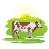 A cow grazing in a meadow. Vector drawing of a cow grazing in the meadow Royalty Free Stock Photo