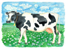 Cow on the green field with daisy flowers. Vintage rural background with summer landscape, watercolor illustration with design graphic elements Royalty Free Stock Image