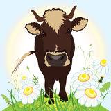 Cow on green field, vector illustration Stock Photography