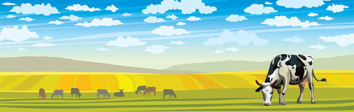Cow and green meadow. Rural landscape. Royalty Free Stock Image