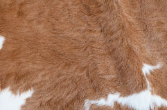 Cow hair. Close-up shot of a cow hair texture Stock Photography