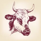 Cow hand drawn vector llustration Royalty Free Stock Photo