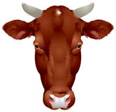 Cow head Royalty Free Stock Images