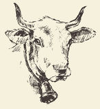 Cow head with bell dutch cattle breed drawn sketch Stock Images