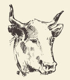Cow head with bell dutch cattle breed drawn sketch Stock Photos