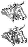 Cow head Stock Image