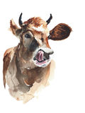 Cow head portrait watercolor painting illustration isolated. On white background Royalty Free Stock Photo