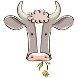 Cow head. Royalty Free Stock Photo