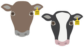 Cow heads with tags Royalty Free Stock Photo