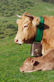 Cow and her calf Stock Photography