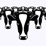 Cow, herd of cows, a image