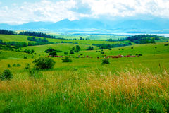 Cow herd grazing on a beautiful green meadow, with mountains in background. Stock Photography