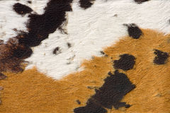Cow-hide. Close-up of a cow-hide, texture Royalty Free Stock Photo