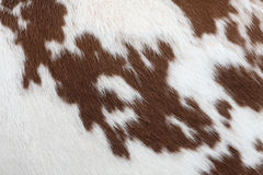 Cow-hide. Textured white and red cowhide, nice background Royalty Free Stock Images