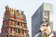 Cow, hindu temple and skyscraper Royalty Free Stock Images