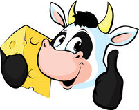 Cow hold Cheese - Vector illustration Royalty Free Stock Image