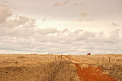 Cow on the Horizon. Under a partly cloudy sky a cow looks down from the top of a hill.  A red dirt road leads up to the top of the hill Stock Photography