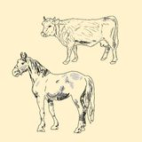 Cow and horse. On a light background Royalty Free Stock Images