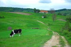 Eco living with cow and house on beautiful hills Stock Photos