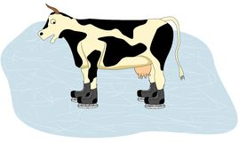 Cow on Ice royalty free stock photography