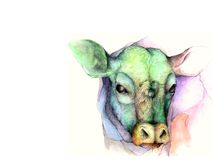 Cow Illustration. A watercolor and graphite illustration of a cow on a white background Stock Photography