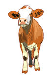 Cow illustration Stock Image