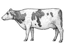Cow illustration, drawing, engraving, ink, line art, vector stock illustration