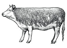 Cow illustration, drawing, engraving, line art, realistic stock illustration