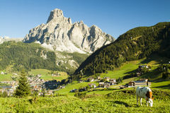 Free Cow In Corvara Royalty Free Stock Image - 29972146