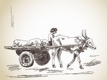 Cow in India. Cow carries a cart and man Hand drawn vector illustration
