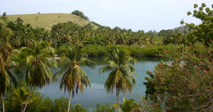 Cow island landscape, Haiti. Tropical vegetation and flowers on Cow Island, Haiti stock images