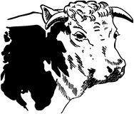 Cow3.jpg Royalty Free Stock Photos