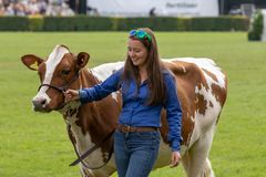 Cow judging at the Great Yorkshire Show