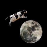Cow Jumping over Moon. A cow jumping over the moon royalty free stock image
