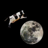 Cow Jumping over Moon. A cow jumping over the moon stock photography