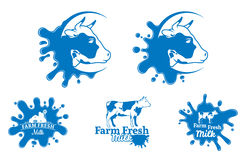 Cow Label, Trade Sign, Icon Template for Diary Products Stock Image