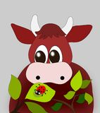 Cow and Ladyug. A cow looking at a ladybug Royalty Free Stock Photo
