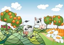 Cow Land Stock Image