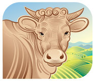 Cow in a landscape Stock Image