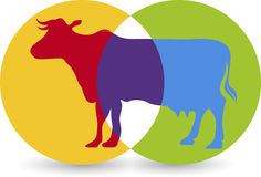 Cow logo. Illustration art of a cow logo with  background Royalty Free Stock Photo
