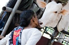 COW LOVINGLY KISSING A WOMAN Stock Photography