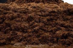 Cow manure heap Royalty Free Stock Images